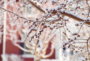 Twigs and Snow in South Jordan, Utah. - Photographer: Rafael Escalios.