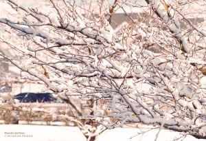 Branches and Snow in South Jordan, Utah. - Photographer: Rafael Escalios.